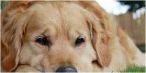 Enciclopedia de enfermedades caninas