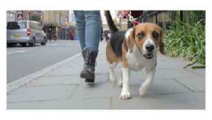 Beneficios de pasear a tu perro